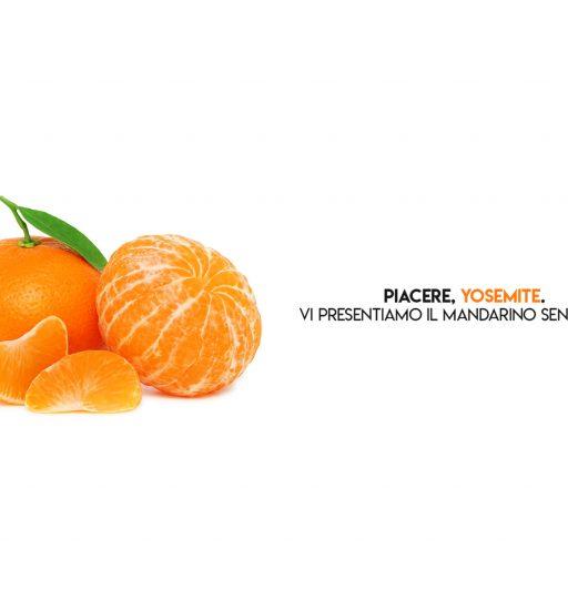 Mandarini e Clementine